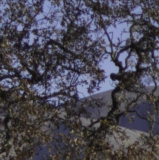 trees a7r 2