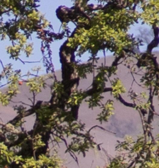 tree a7 100 f4