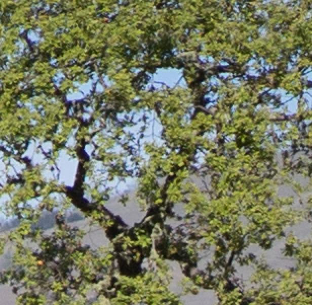 tree a7 28