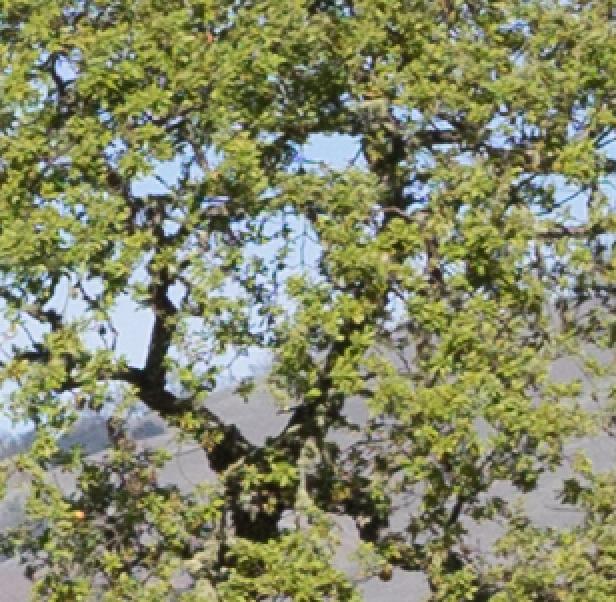 tree a7 56