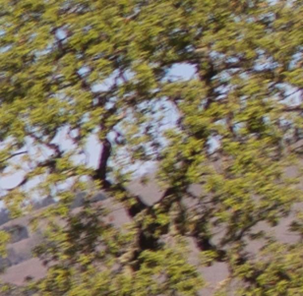 tree m240 28
