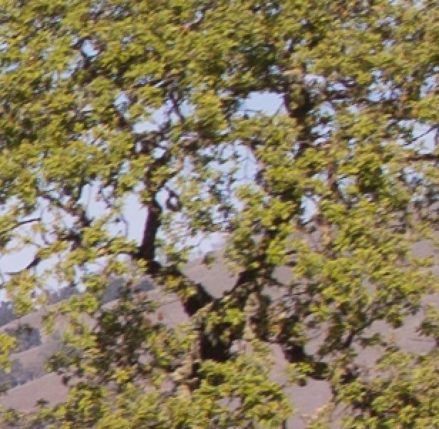 tree m240 56
