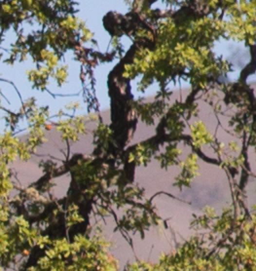 tree m240 90 f 4