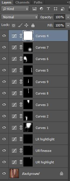 curves dw succulent