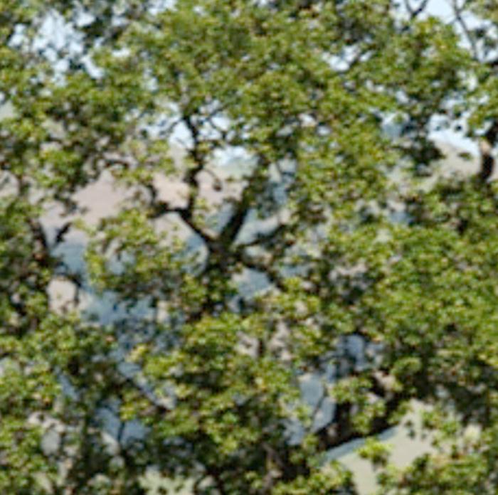 1 pixel motion blur -- MTF50V = 1287, MTF50H = 963